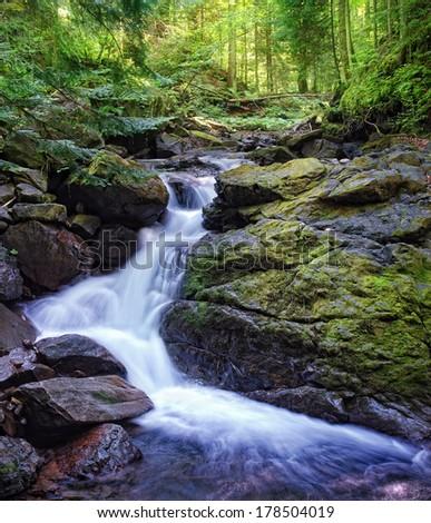 Deep wood. Carpathians, Ukraine. - stock photo