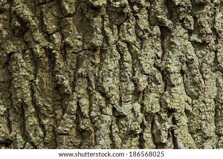 Deeply fissured bark of Oak Tree in English woodland - stock photo