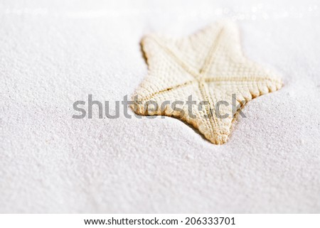 deepwater rare starfish in white beach sand, shallow dof