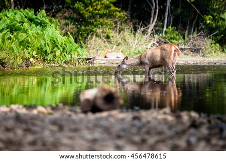Deer and drink  - stock photo