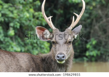 Deer are wild animals in the wild. Food is typical grass Usually found in grasslands Turrets.Good a natural Shineys