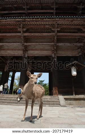 Deer at Nara Temple - stock photo