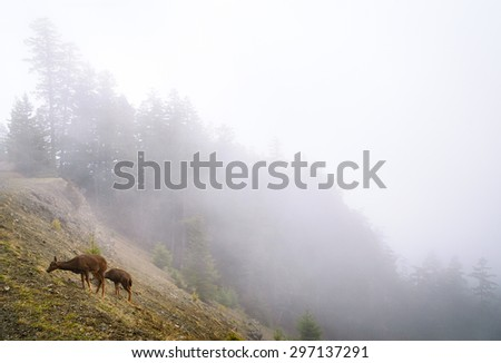 Deer at Olympic National Park - stock photo
