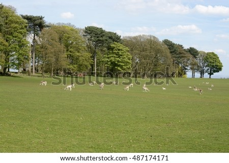 Deer at Tatton park, Cheshire