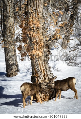 Deer at Zion National Park - stock photo