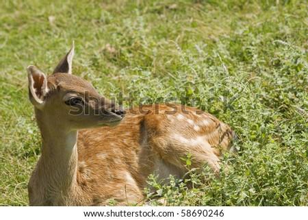 Deer baby. - stock photo