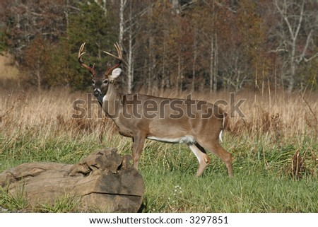 Deer buck in field of long grass