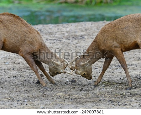 Deer collision - stock photo