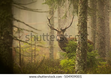 deer comes from misty forest