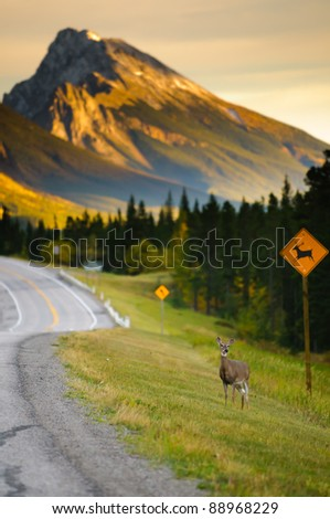 Deer crossing on the side of a highway in the mountains - stock photo