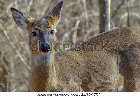 Deer face to face - stock photo