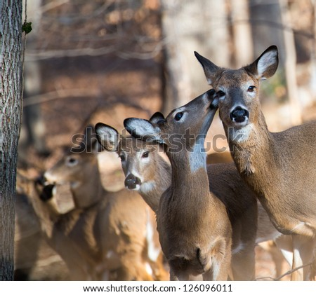 Deer family in winter forest - stock photo