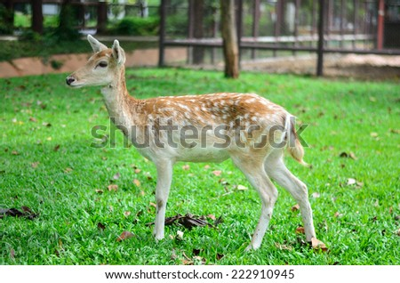 deer, fawn, animal, antlered, antlers, baby, background, big, brown, buck, capreolus, deer, doe, ears, eat, eating, eye, eyes, female, field, flies, forest, fur, game, grass - stock photo