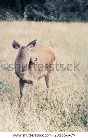 deer fawn standing in tall grass. - stock photo