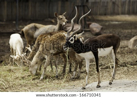 Deer feeding in the forests of Thailand.