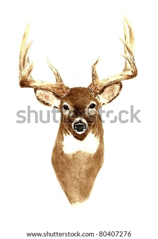 Deer - Front View - stock photo