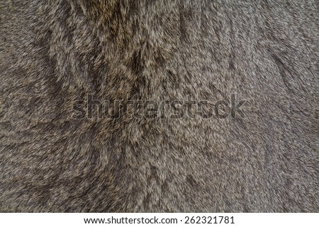 deer fur gray background. skin - stock photo