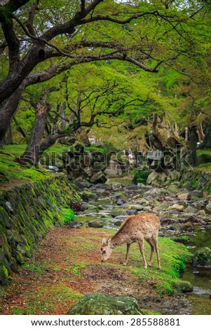 Deer graze in the garden japanese - stock photo