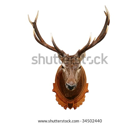 Deer head isolated on white background - stock photo