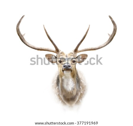 deer head on white background - stock photo