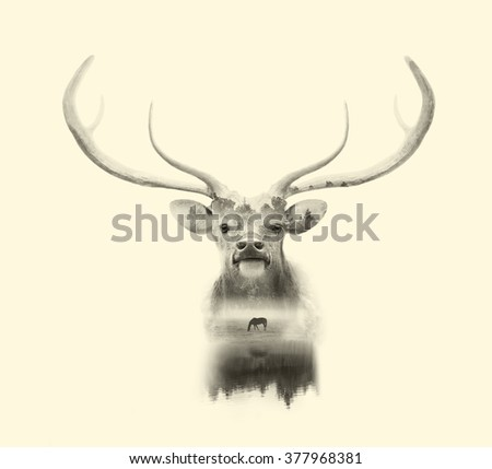 deer head on white background with double exposre effect - stock photo