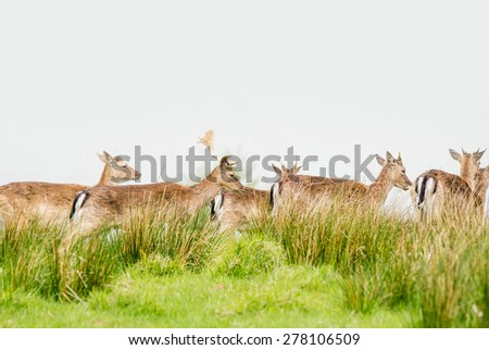 Deer herd on a green meadow with grass - stock photo