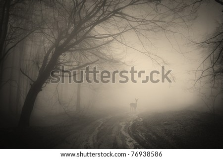deer in a forest on a rainy day - stock photo