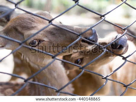 deer in a zoo behind a fence