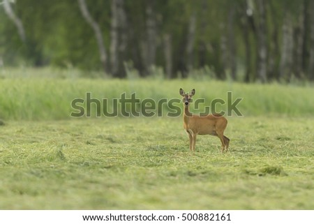 deer in captive, deer in a cage, nature series