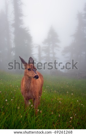 Deer In Fog-Filled Meadow