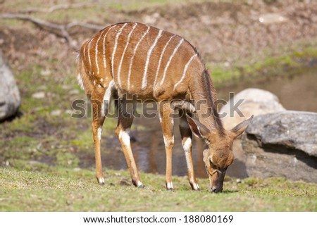 Deer in nature  - stock photo