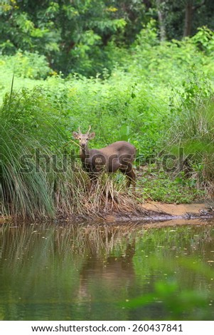 Deer in the forest - stock photo
