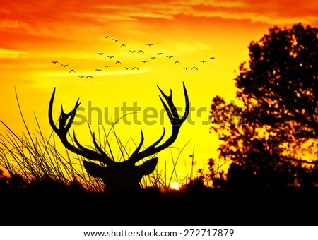 deer in the forest at sunrise - stock photo