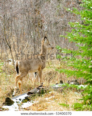 Deer in the forest, Fish Creek provincial park, Calgary Alberta Canada - stock photo