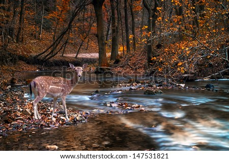 Deer in the forest with river - stock photo