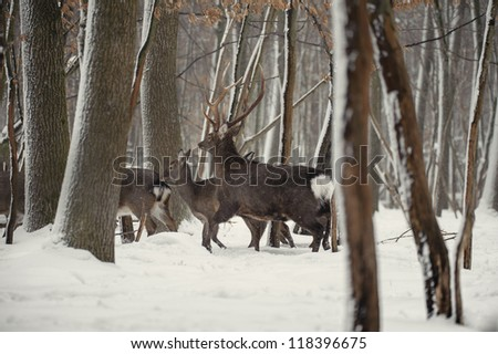 deer in the frosty winter forest - stock photo