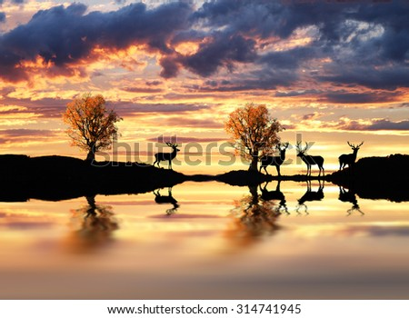 deer in the lake - stock photo