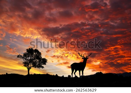 deer in the mountains - stock photo