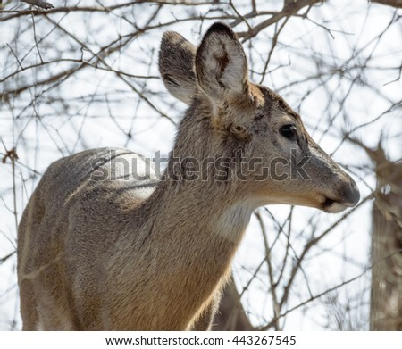 Deer in woods - stock photo