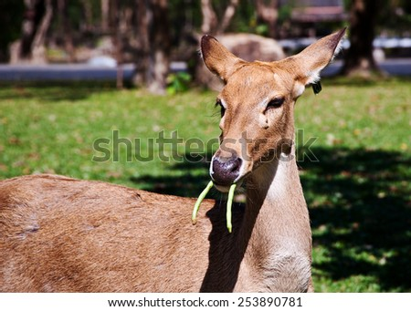 Deer in zoo - stock photo