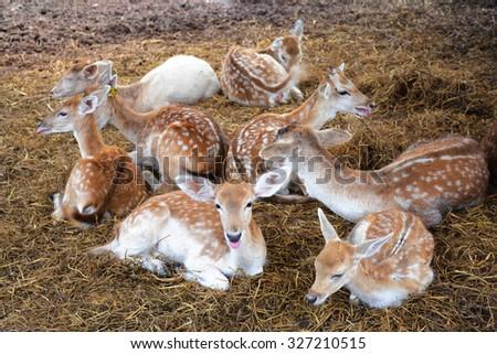 deer in zoo - stock photo
