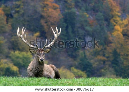 deer on a colourful background - stock photo