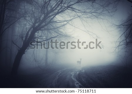 deer on a road in a dark forest after rain - stock photo