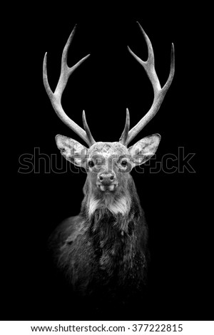 Deer on dark background. Black and white image - stock photo