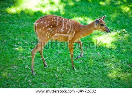 deer on the background of green grass in a zoo - stock photo
