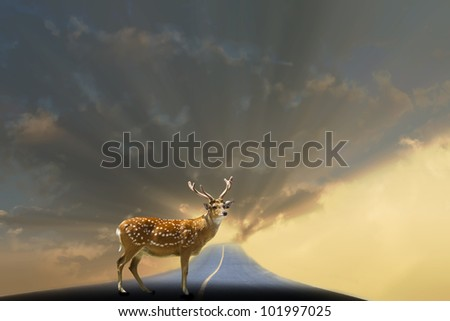 deer on the road concept for success - stock photo