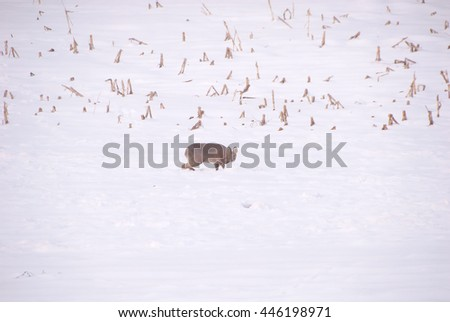 deer on the snowfield:at the Asia/deer on the snowfield - stock photo