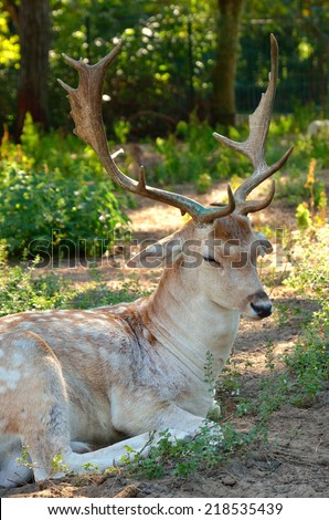 deer resting in the natural park