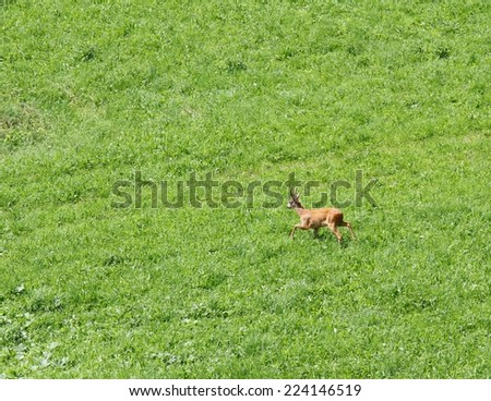 Deer run free on the mountain meadow - stock photo