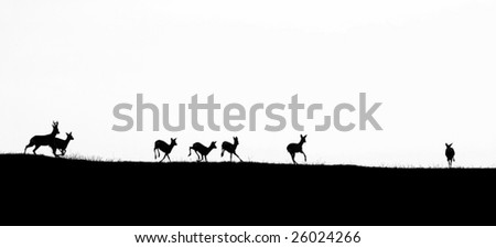 Deer running on a hilltop in strong counter light. - stock photo
